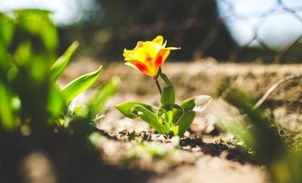 Flor amarela no sol do verão.