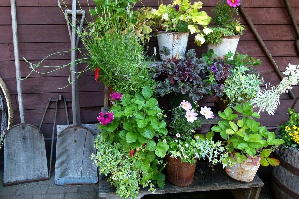 Espaço com vasos de plantas em quintal