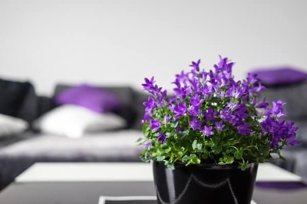 Vaso flor violeta em cima da mesa