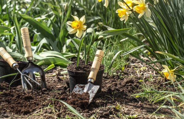 Jardinagem gastando pouco