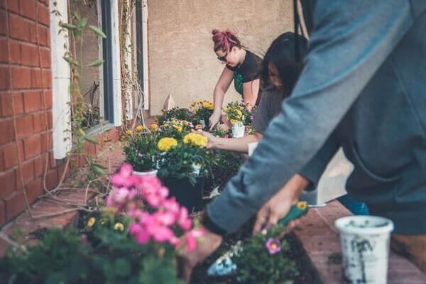 Tipos de terra para jardim