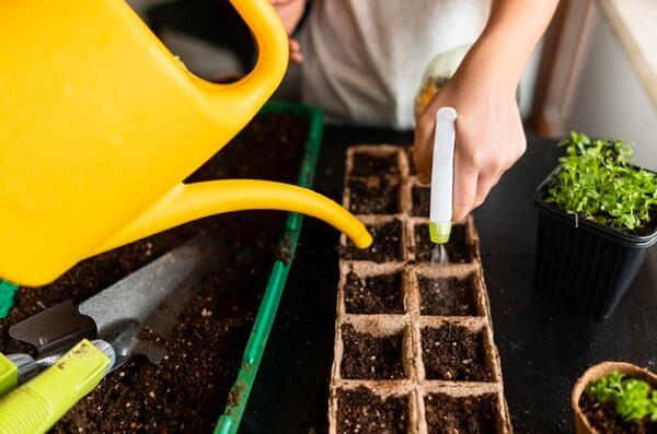Você sabe quais os cuidados necessários para ter uma horta em casa?