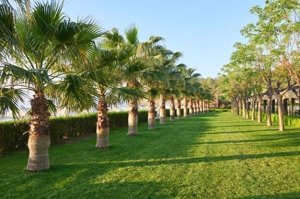 Você sabe como fazer corretamente a escolha da grama do quintal? Saiba mais sobre a grama sintética aqui!