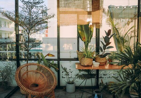 Existem excelentes motivos para ter plantas em casa. Acesse e conheça!
