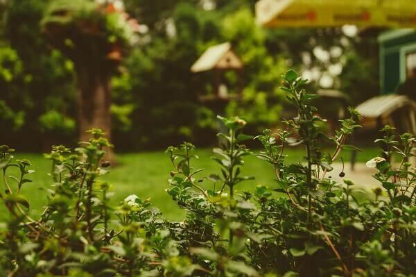 Aprenda a cuidar do jardim no inverno