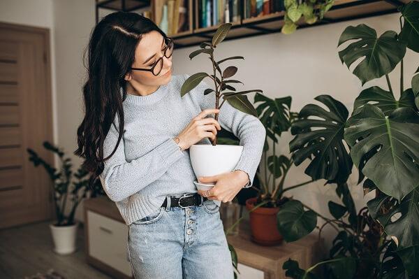 saiba como decorar sua casa com plantas artificais